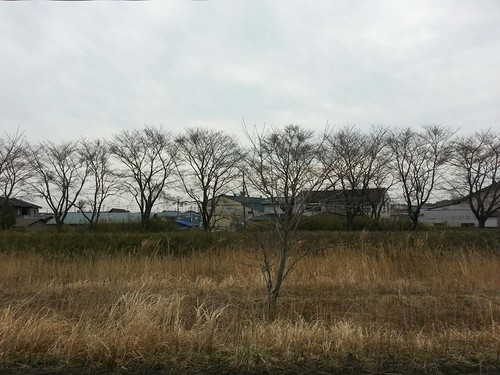 小高川沿い、桜は全然まだまだですね。