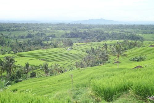 Jatiluwih rice terrace 2