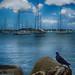 Birds Eye Harbor View