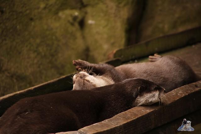 Eisbär Lili im Zoo Bremerhaven 30.04.2016 Tei 1  103