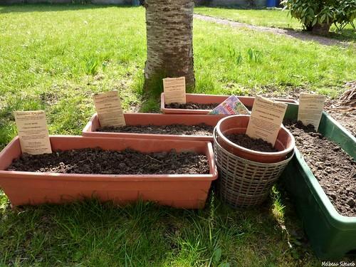 semis & fleurs du jardin