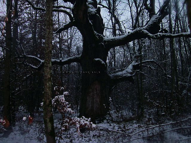 Mociar Forest (1), Transylvania, Romania