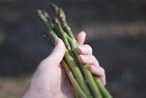 Asparagus for dinner