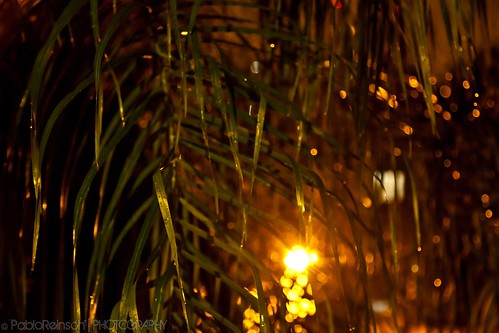Interlaced bokeh.
