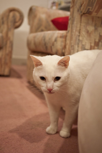 Aghast kitty