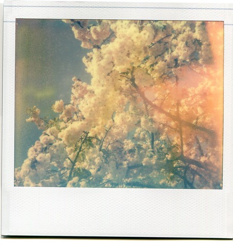 Spectra Blossoms 1