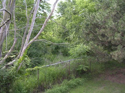 [Woods #2