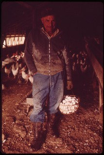 John Dolezal, dressed for rain, in hen-house of his farm near Bee,  Nebraska. Abnormal rainfall for the area this year greatly increased problems of local farmers, May 1973