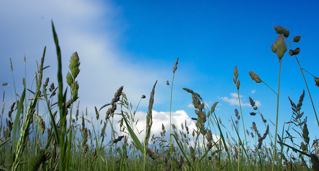 Green grass and blue sky by Magnus Attefall