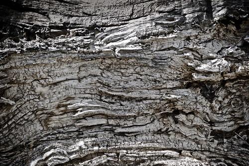 france byn texturas naturalezamuerta latourdecarol troncodeárbol midipyrenées