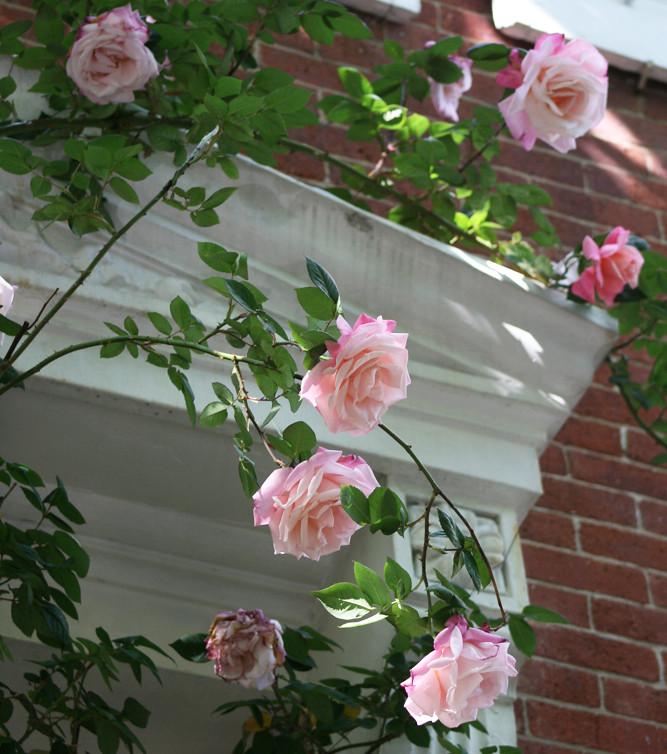 pinkdoor2