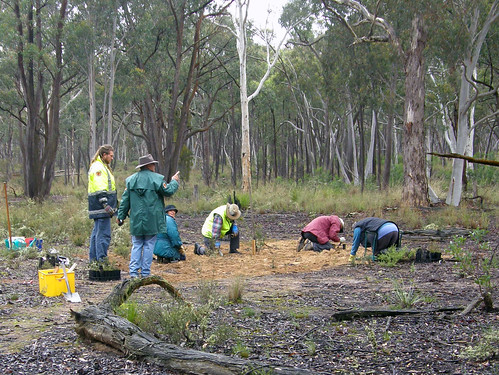 Gundaroo Nature Reserve volunteer planting (6)