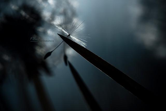 Décrocher les étoiles - Mindblowing Macro Photography