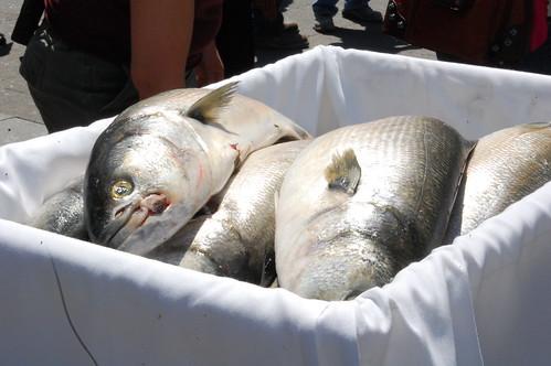 Fish Toss 2012