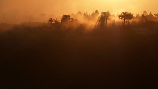 Sunset Fog/Tree Shadows