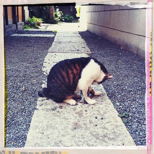 猫さん #hipstamatic