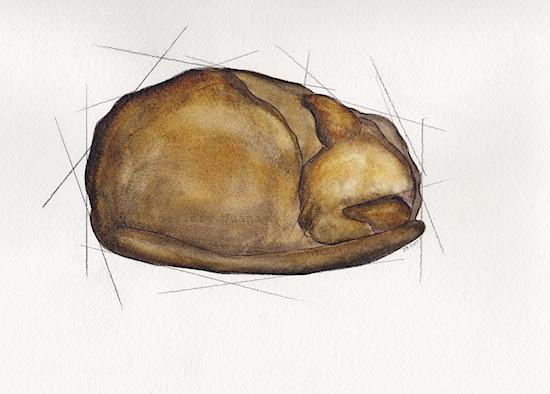 Euclids Cat II