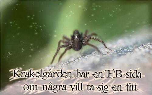 FB sida