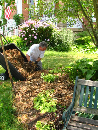 mulching the hosta bed