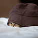 The Cat in the Oversized Hat by torode