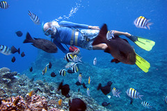 coral reef, fish, underwater diving, coral reef fish, swimming, sports, sea, recreation, outdoor recreation, marine biology, scuba diving, water sport, underwater, reef, pomacentridae,