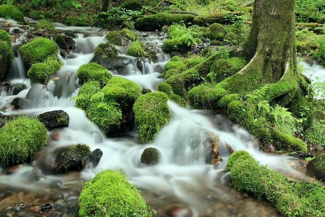 mossy stones.