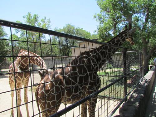 Z Crew Zoo
