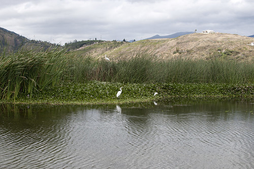 fauna ecuador laguna provincia ibarra imbabura yahuarcocha