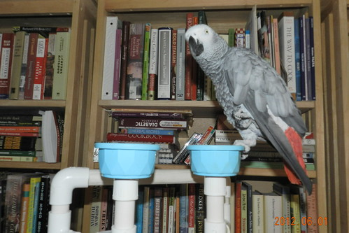 Rumbles on play perch