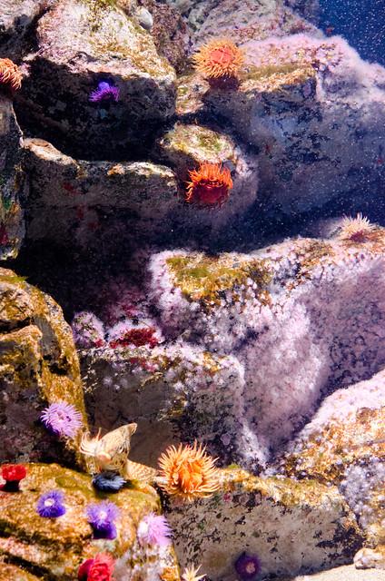 南アフリカ沿岸水槽 Coastal waters of South Africa tank