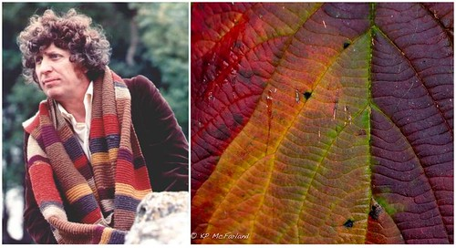 Doctor Who Scarf Leaf