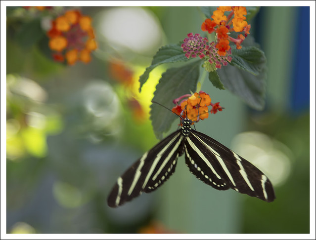 DBG Butterfly House 8