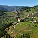 Bariqueiros, Douro valley, Portugal by Alona Azaria