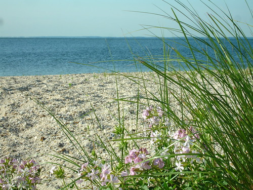 Beach, Piney Point Lighthouse, Piney Point