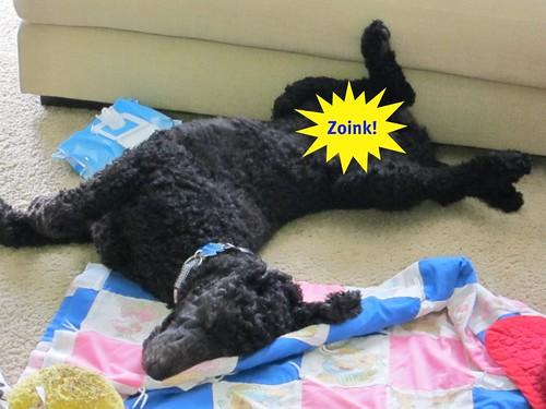 lazy george