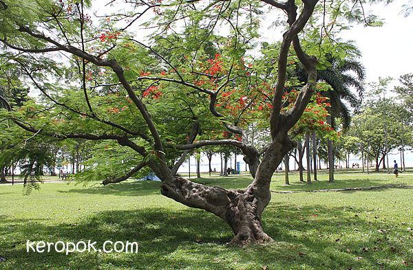 Slouching Tree at East Coast Park