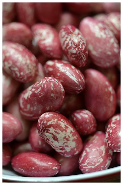 borlotti beans© by Haalo