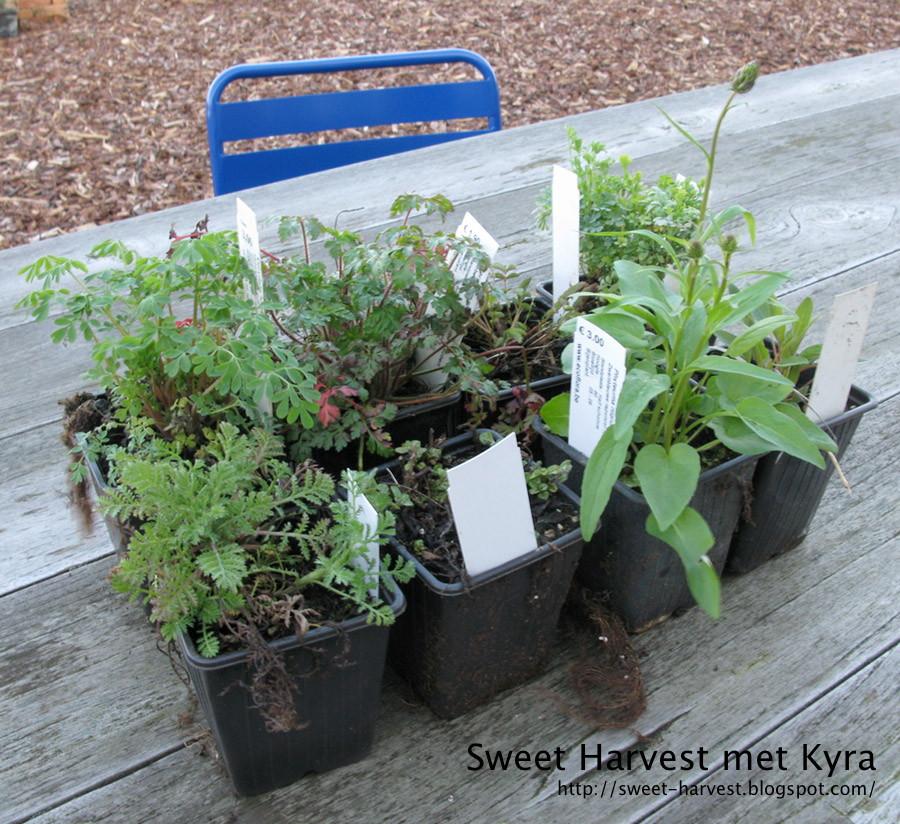 Kyra's Ecoflora aanwinsten