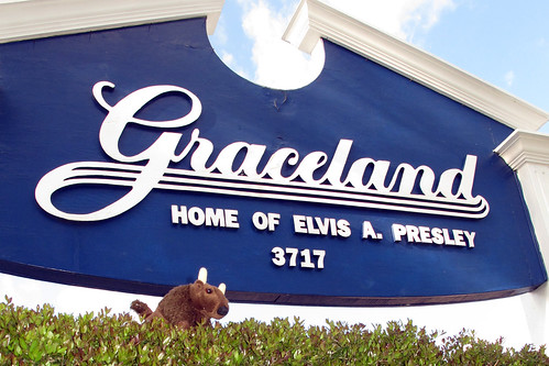 Memphis Buddy Bison-Graceland