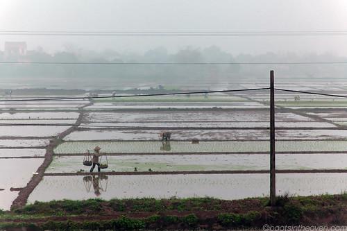 Misty Rice Farming on the way to Ha Long Bay