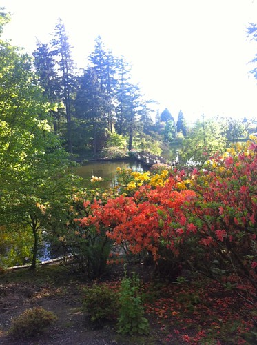 View over the Crystal Springs Rhododendron Garden