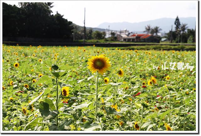 滿州花海IMG_1454