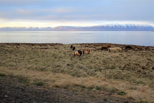 Sunset Along Skagafjörður
