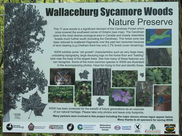 Wallaceburg Sycamore Woods