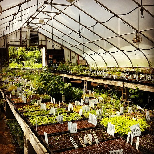 Greenhouse at Shooting Star Nursery