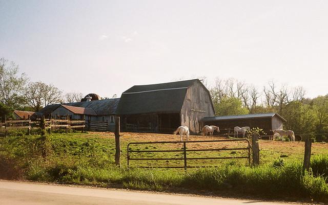 pasture3