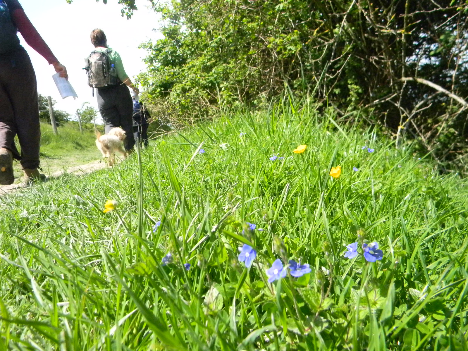 Speedwell Berwick to Birling Gap