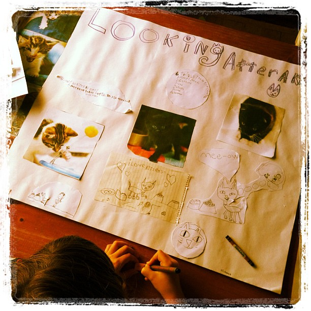 Hard at work. Researching. Poster making... Uh-oh @berondi #bigowletwantsakitten #kitten #poster #unschooling
