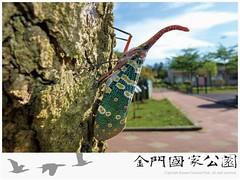 龍眼雞-01.jpg