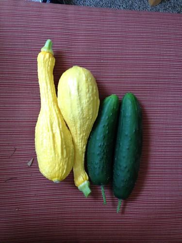 2012.05.27 squash & cucumbers